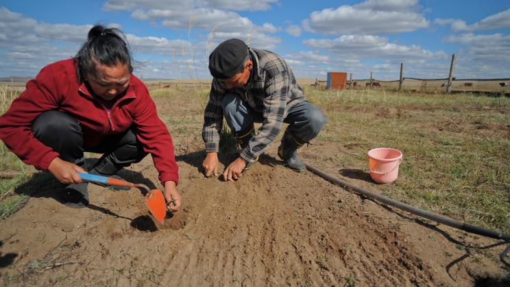 Mongolian herders combat consequences of climate change by using animal feed that is more resilient towards extreme weather changes.