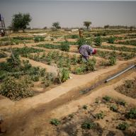An agricultural project in Mali.