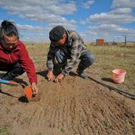 Mongolian herders combat consequences of climate change by using animal feed that is more resilient towards extreme weather changes