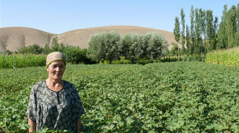 Cotton farmer in Kyrgyzstan